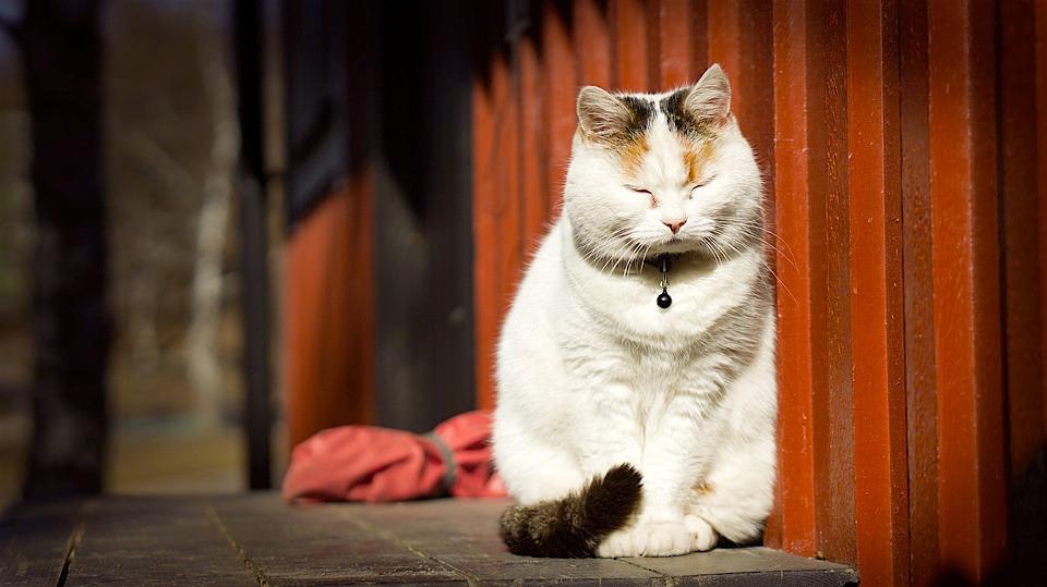 cat-1276634_960_720
