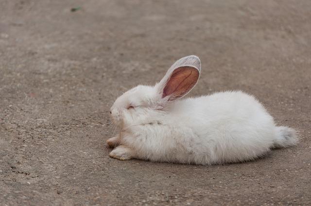 rabbit-905971_640