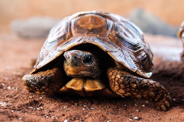 turtle-509524_640